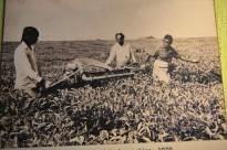 Le ramassage des feuilles au XIXème