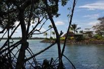 Protection de la mangrove devant Four-Seasons