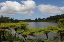 La plantation autour d'un ancien cratère devenu un lac naturel