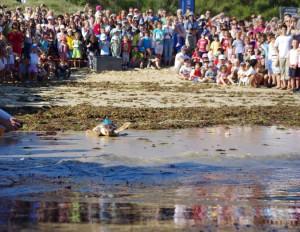 Remise a l'eau de la tortue-Caouanne © Aquarium La Rochelle SAS
