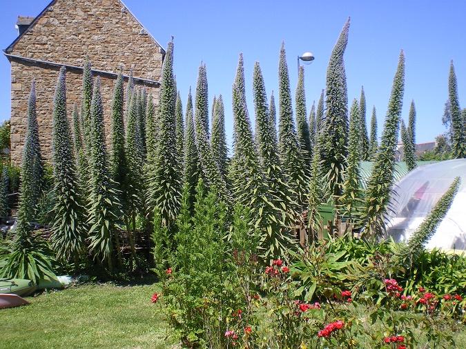 Plantes photo M.Hamonnet
