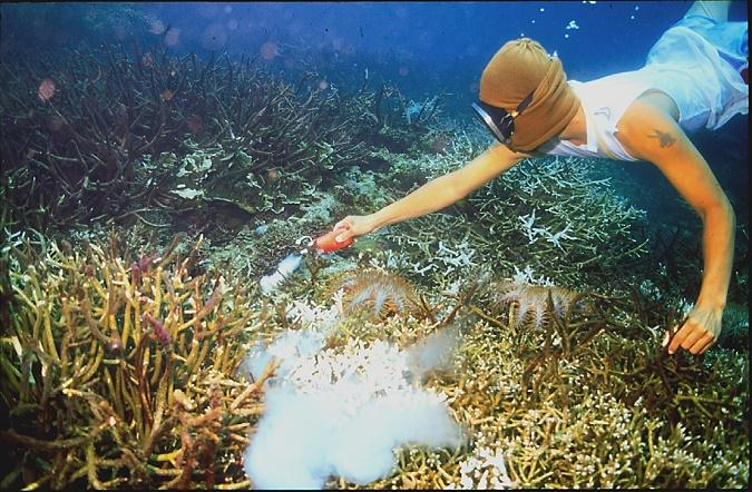 Cyanide Fishing_James Cervino_NOAA