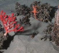 Les canyons sous-marins, des écosystèmes fortement menacés par les activités humaines