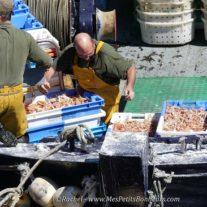 Aides aux entreprises de la pêche et de l'aquaculture : la Région Nouvelle-Aquitaine à la pointe